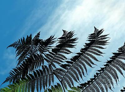 Palms Flying High Art Print