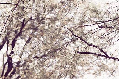 Photograph - Palo Brea Blossoms On Tree In Lavender Dawn by Colleen Cornelius