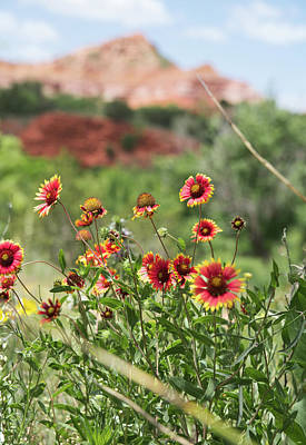 Its A Piece Of Cake - Palo Duro Canyon State Park by Andrea Anderegg