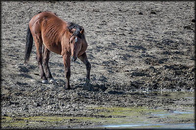 Photograph - Palomino Buttes Mustang On Its Own by Belinda Greb