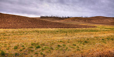 Photograph - Palouse Farmland by David Patterson