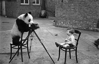 Photograph - Panda Photo by Bert Hardy