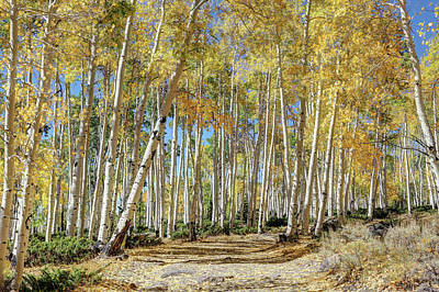 Photograph - Pando Miracle by Donna Kennedy