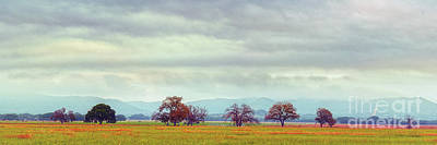 Photograph - Panorama Of Lone Oaks Standing In A Prairie - Uvalde County Utopia Texas Hill Country by Silvio Ligutti