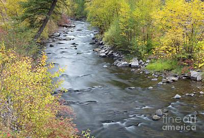 Animal Paintings David Stribbling - Panther Creek Autumn by Idaho Scenic Images Linda Lantzy