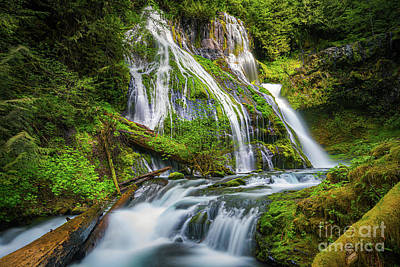 Moody Trees - Panther Creek Falls, Washington, USA by Henk Meijer Photography
