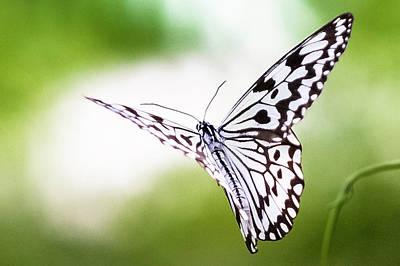 Photograph - Paper Kite by Chen-chou Chang