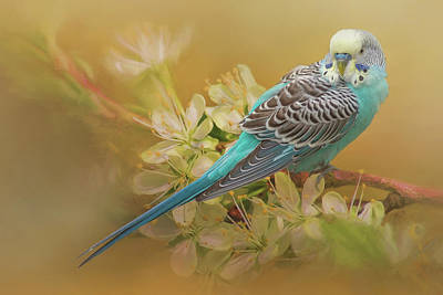 Photograph - Parakeet Sitting On A Limb by Cindy Lark Hartman