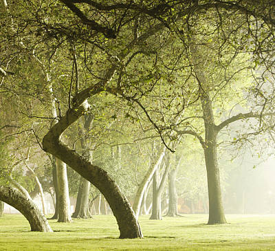 Photograph - Park At Night by Paul Taylor