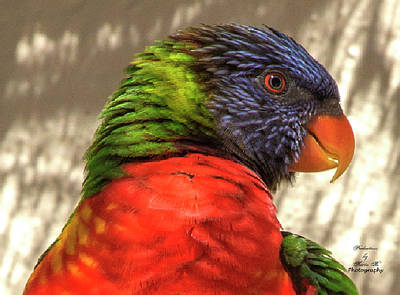 Photograph - Parrot by Kevin Banker
