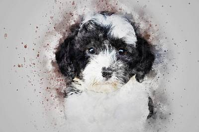 Poodle Wall Art - Painting - Parti Color Poodle by ArtMarketJapan