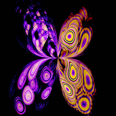 Jodi Diliberto Royalty-Free and Rights-Managed Images - Parti-colored Butterfly by Jodi DiLiberto
