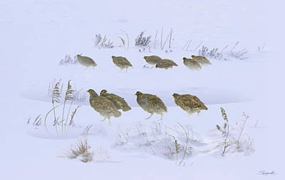 Digital Art - Partridge Covey In The Snow by M Spadecaller