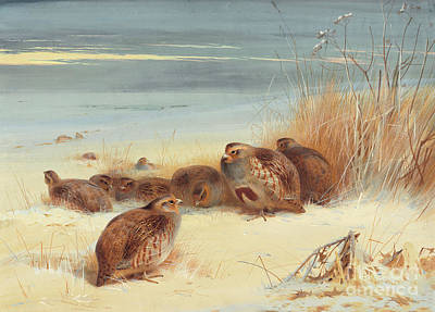 Painting - Partridge On A Frosty Morning, 1903 by Archibald Thorburn