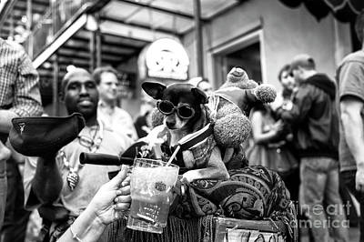 Photograph - Party Dog On Bourbon Street New Orleans by John Rizzuto