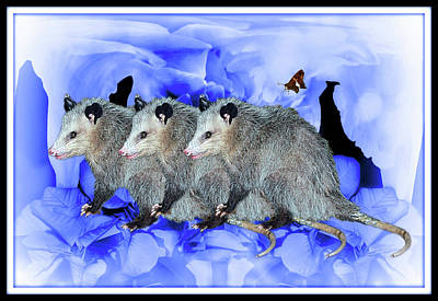 Animals Digital Art - Party Of Possums  by Constance Lowery
