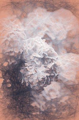Digital Art - Pastel Hydrangeas by Helen White