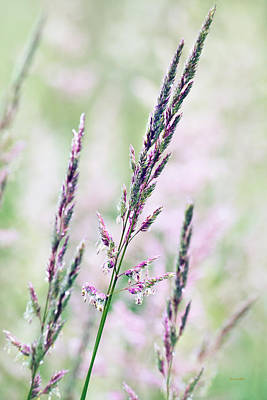 Photograph - Pastel Pink Abstract Grass by Christina Rollo