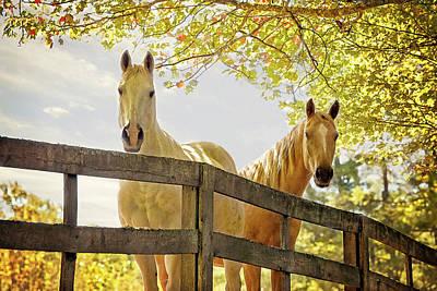 Photograph - Pasture Buddies by SL Ernst