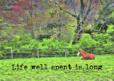Photograph - Pasture Napping Quote by JAMART Photography