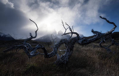 Photograph - Patagonian Tree by Photography by KO