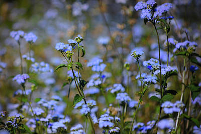 Photograph - Patch Of Blue by Perry Correll