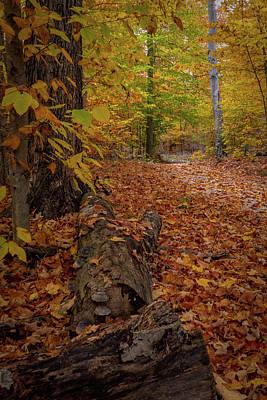 Photograph - Path by David Heilman