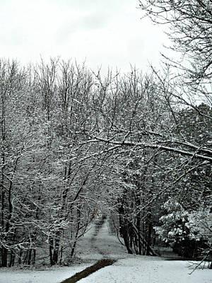 Photograph - Path To Woe by Cyryn Fyrcyd