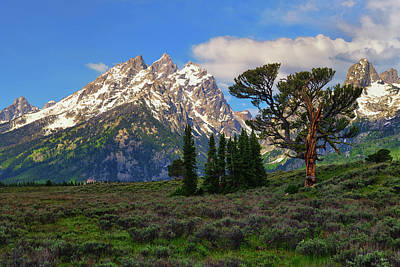 Photograph - Patriarch Tree And The Cathedral by Greg Norrell