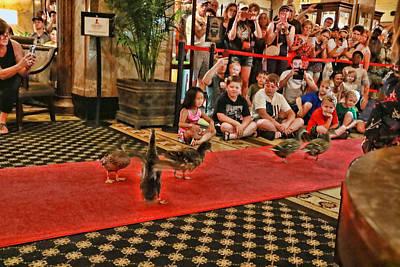 Photograph - Peabody Hotel Ducks # 5 - Memphis by Allen Beatty