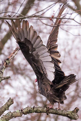 Photograph - Peace Eagle Taking Off In The Rain by Terry DeLuco