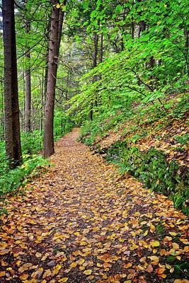 Art Print featuring the photograph Peaceful Autumn Trail At Watkins Glen State Park by Lynn Bauer