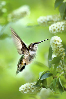 Photograph - Peaceful Love Hummingbird by Christina Rollo