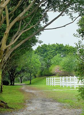 Photograph - Peaceful Path by Perry Correll