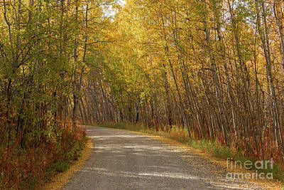 Photograph - Peaceful Travels by Sandra Bronstein