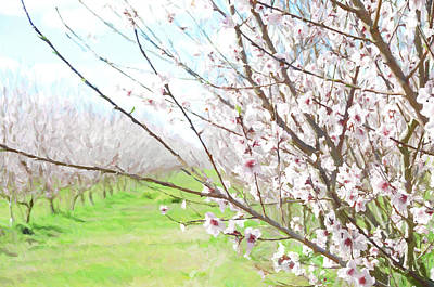 Photograph - Peach Orchard #painting by Andrea Anderegg