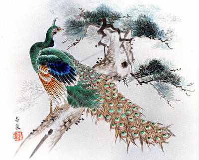 Painting - Peacock by Shisen