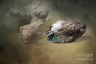 Photograph - Peafowl Dust Bathing by Eva Lechner