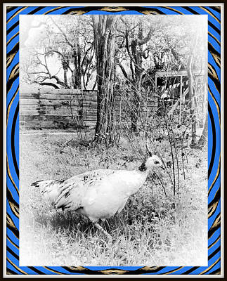 Birds Rights Managed Images - Peahen Royalty-Free Image by Constance Lowery