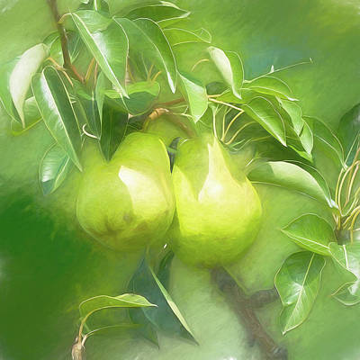 Photograph - Pear Branch by Leslie Montgomery