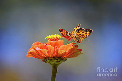 Photograph - Pearl Crescent Couple by Karen Adams