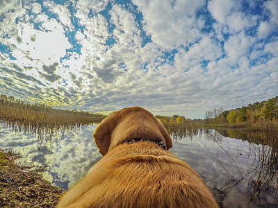 Art Print featuring the photograph Pee Dee Reflections by Matthew Irvin