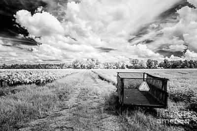 Photograph - Pee Dee Tobacco Field B-w by Charles Hite