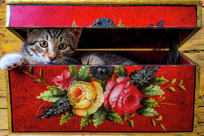 Photograph - Peeking Out Of A Red Box by Garry Gay
