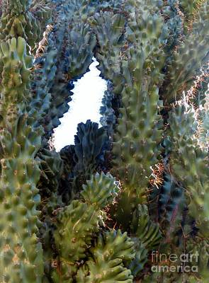 Photograph - Peeking Through Cactus by Rosanne Licciardi