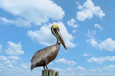 Photograph - Pelican At The Beach by Kim Hojnacki