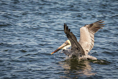 Photograph - Pelican Landing by Framing Places