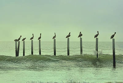 Photograph - Pelican Pilings  by Jamart Photography