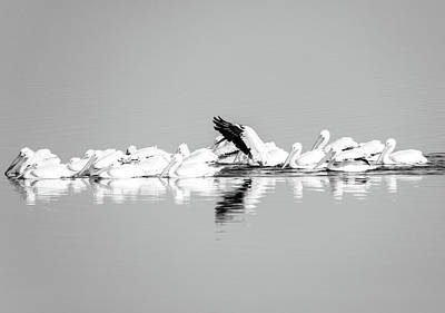 Photograph - Pelican Reflections by Dan Sproul