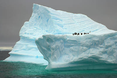 Photograph - Penguins On Iceberg,  Antarctic by Eastcott Momatiuk